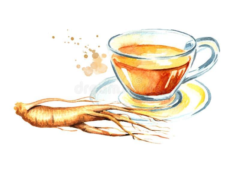 O chá do ginsém, ginsém enraíza, conceito da bebida saudável Ilustração tirada mão da aquarela isolada no fundo branco ilustração royalty free