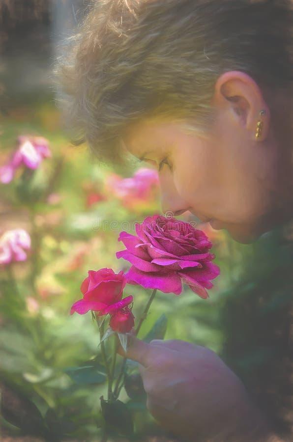 O cheiro doce da Damasco Rosa fotografia de stock royalty free