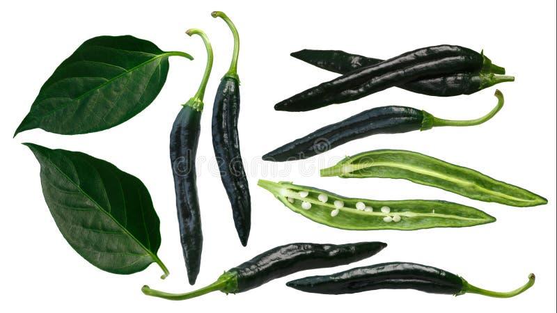 O chilaca de Pasilla Bajio salpica, as folhas, trajetos ilustração stock