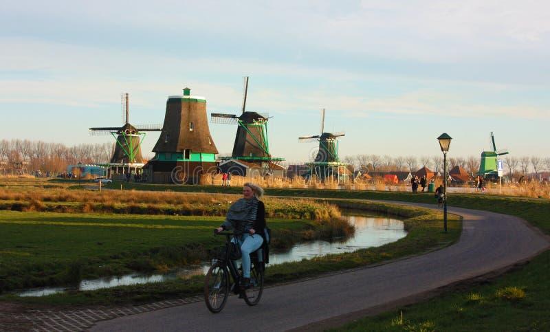 O ciclista holandês local quieto que pedaling pacificamente entre o zaandam pavimentou trajetos fotos de stock royalty free