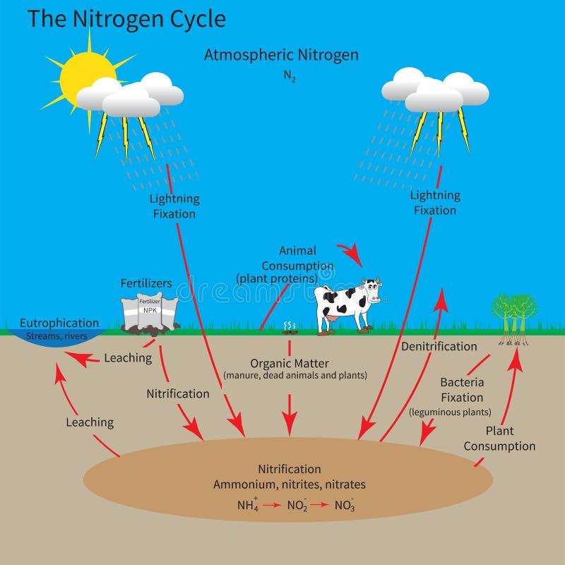 O ciclo de nitrogênio ilustração royalty free