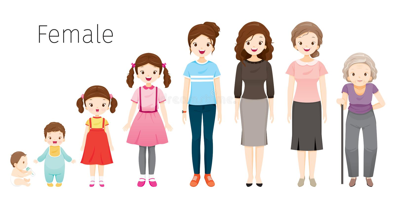 O ciclo de vida da mulher Gerações e fases do crescimento do corpo humano Idades diferentes, bebê, criança, adolescente, adulto,  ilustração stock