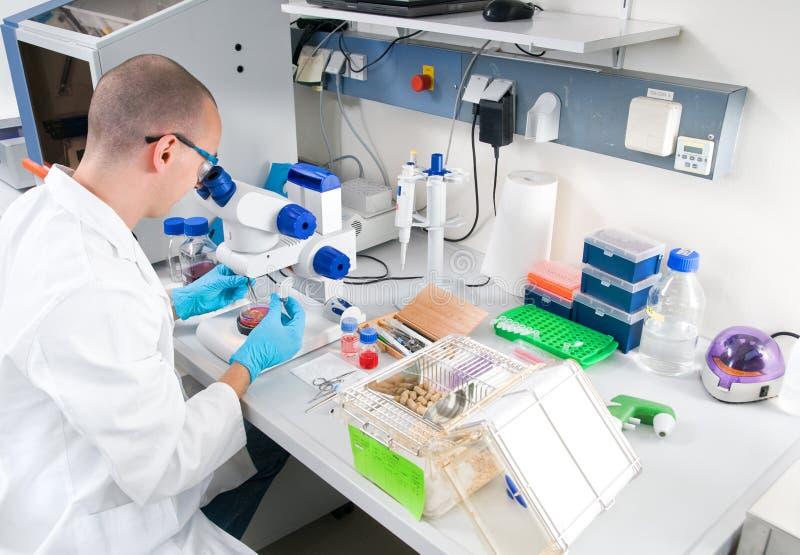 O cientista novo trabalha no laboratório fotografia de stock