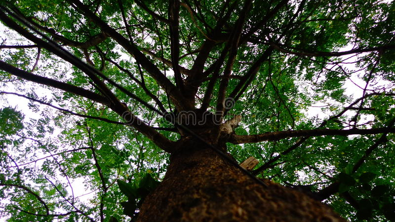 O cilindro cola a árvore fotos de stock