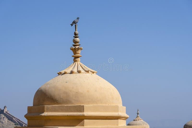 O cinza mergulhou na ab?bada no forte ambarino em Jaipur, Rajasthan, ?ndia imagens de stock royalty free