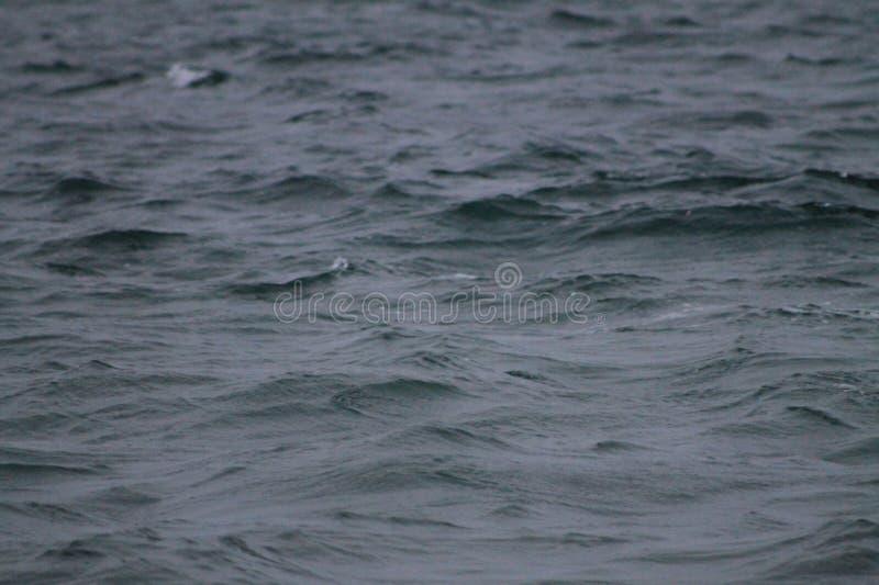O close up acena o mar de Key Biscayne fotografia de stock