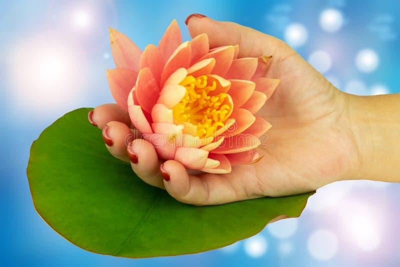 O close up da mão fêmea com os pregos cor-de-rosa manicured realiza no ha imagens de stock royalty free