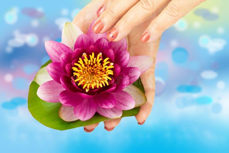 O close up das mãos fêmeas com os pregos cor-de-rosa manicured realiza no h fotos de stock