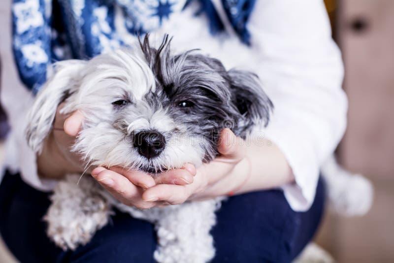 O close-up de um cão branco em uma mulher abraça imagem de stock