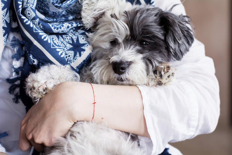 O close-up de um cão branco em uma mulher abraça fotografia de stock