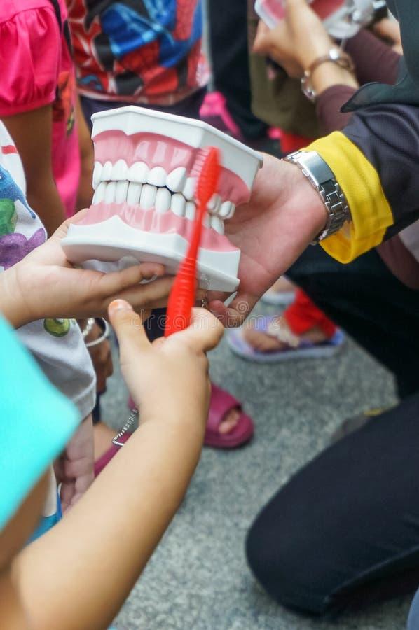 O close up disparou de um instrutor fêmea que guarda para fora uma réplica dos dentes fotos de stock royalty free