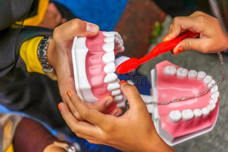O close up disparou de um instrutor fêmea que guarda para fora uma réplica dos dentes imagens de stock royalty free