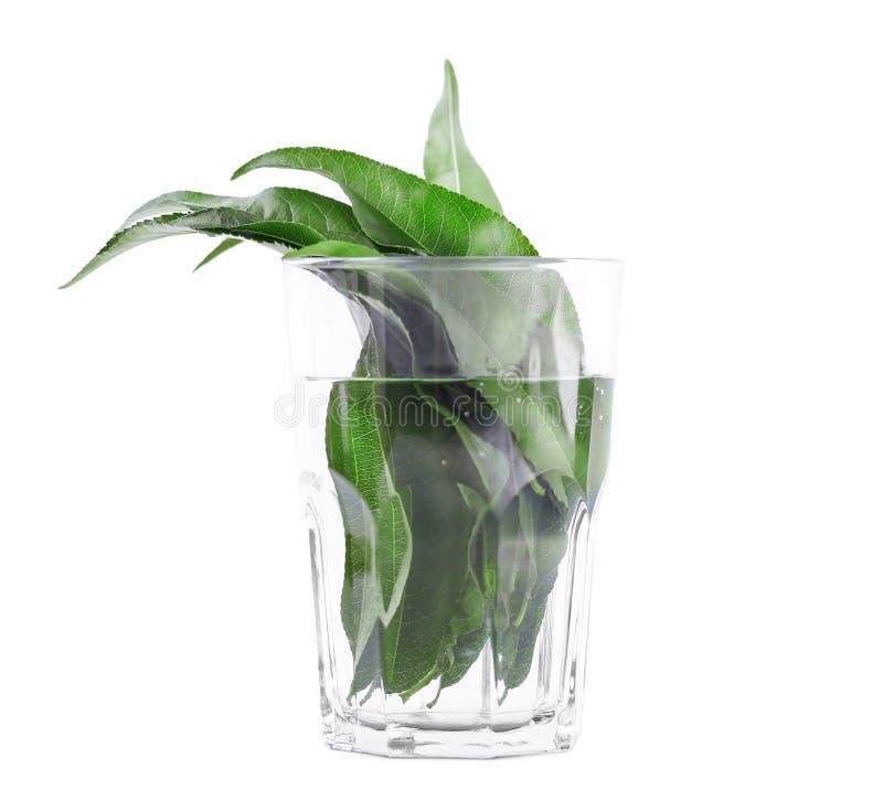 O close-up do citrino verde sae no vidro transparente, completo da água Folhas frescas brilhantes, isoladas no fundo branco imagem de stock royalty free