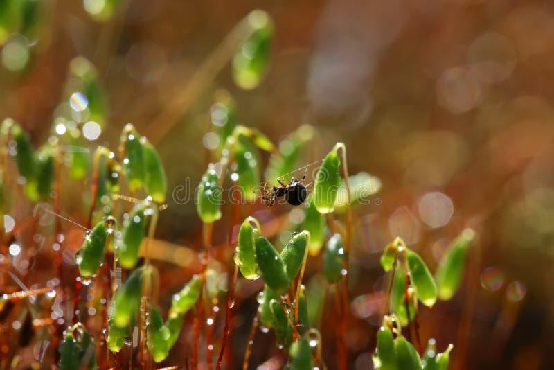 O close up do musgo nos raios do sol é coberto com as gotas do de imagem de stock royalty free