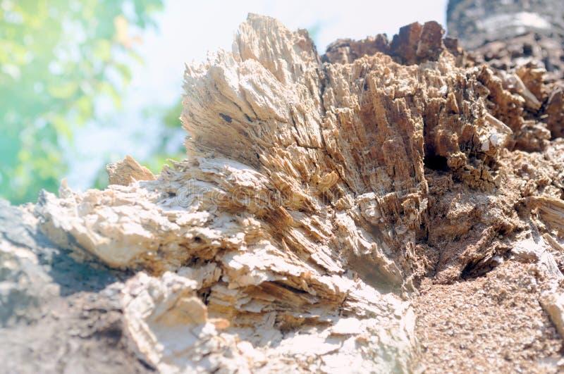 O close-up velho quebrado do tronco de árvore similar à montanha cobre imagens de stock royalty free