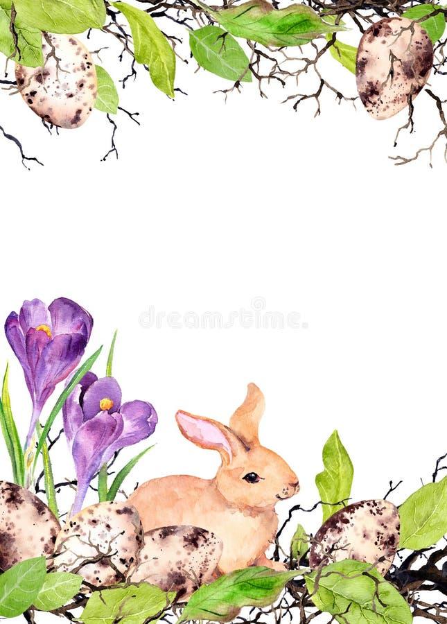 O coelhinho da Páscoa com ovos coloridos, grama, açafrão floresce Cartão de Páscoa da aquarela ilustração stock