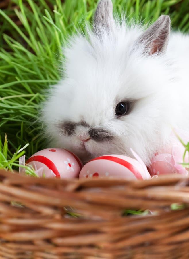 O coelho branco está na cesta com grama verde fotos de stock royalty free
