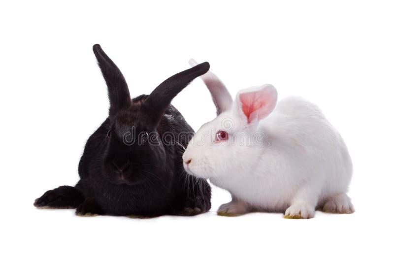O coelho preto e o coelho do branco isolaram-se imagem de stock