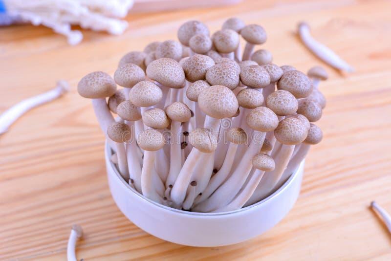 O cogumelo da faia de Brown, shimeji cresce rapidamente no fundo de madeira foto de stock royalty free