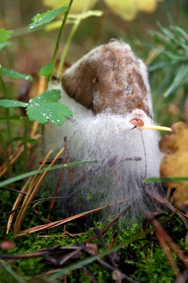 O cogumelo na floresta é afetado pelo molde branco fotos de stock royalty free