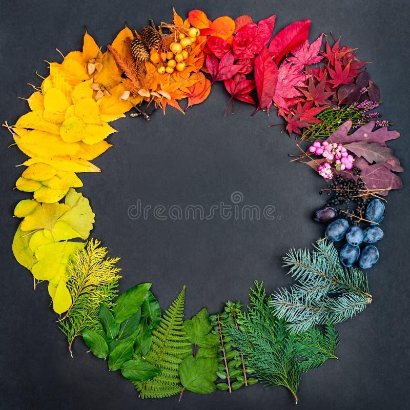 O conceito criativo com coleção de objetos naturais coloridos deu forma na roda de cor fotos de stock royalty free