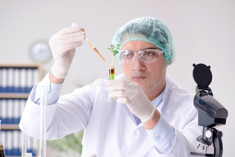 O conceito da biotecnologia com o cientista no laboratório fotos de stock royalty free