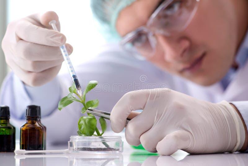 O conceito da biotecnologia com o cientista no laboratório fotos de stock