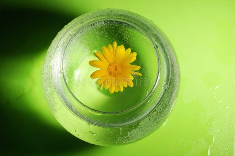 O conceito da ecologia flor amarela do calendula e da água dentro fotografia de stock royalty free