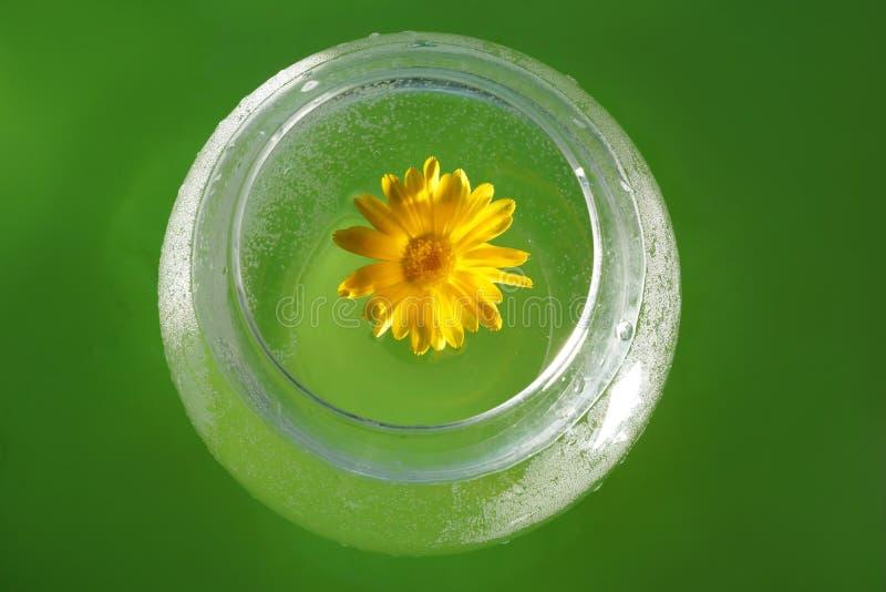 O conceito da ecologia flor amarela do calendula e da água dentro fotos de stock royalty free