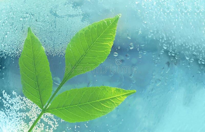 O conceito da ecologia um ramo das folhas e da água do verde na fotos de stock royalty free