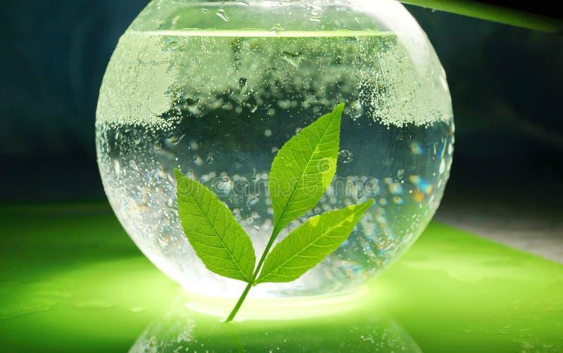 O conceito da ecologia um ramo das folhas e da água do verde na foto de stock royalty free