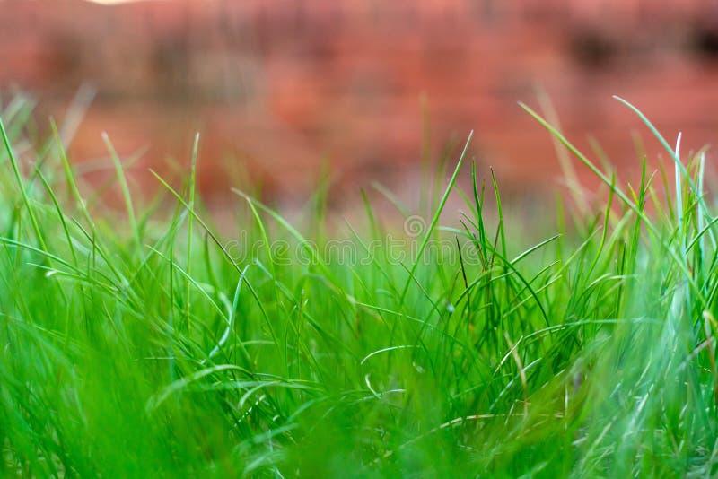 O conceito da mola e do fundo do verão, fecha-se acima do campo de grama verde com fundo borrado imagens de stock royalty free