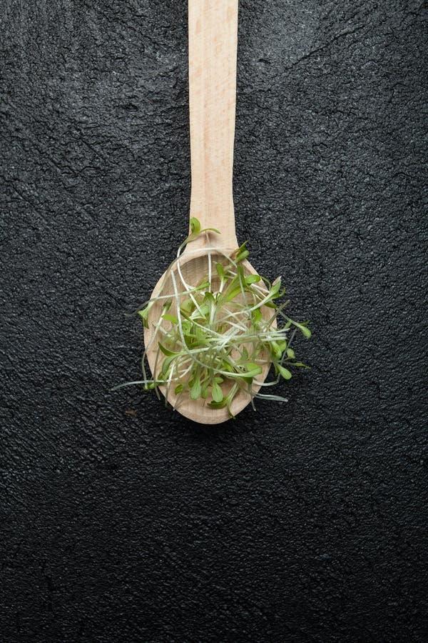 O conceito da nutrição dietética, perda de peso, preservação da juventude Uma colher de madeira com micro verdes da salada vegeta fotos de stock royalty free