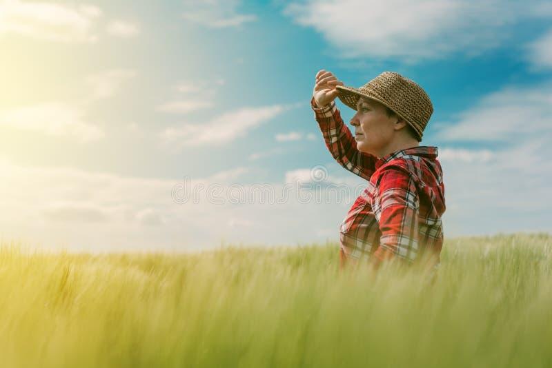 O conceito do cultivo responsável, fazendeiro fêmea no cereal colhe o fi imagem de stock royalty free