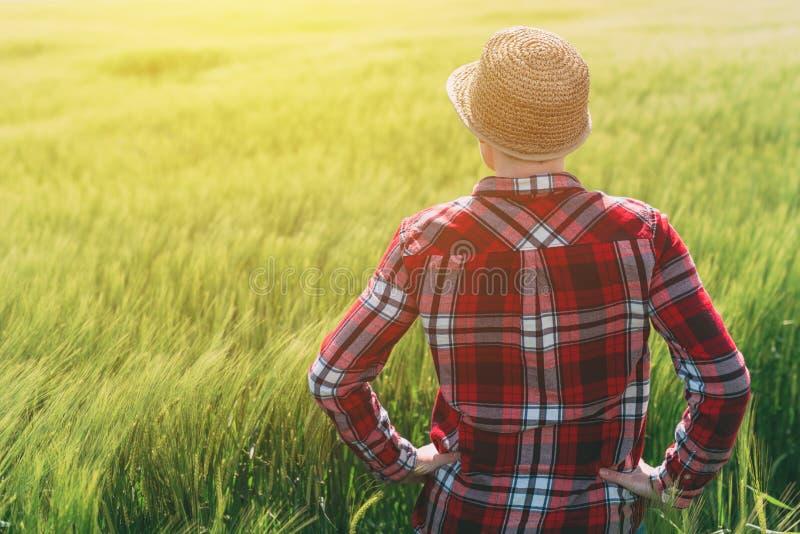 O conceito do cultivo responsável, fazendeiro fêmea no cereal colhe o fi imagem de stock