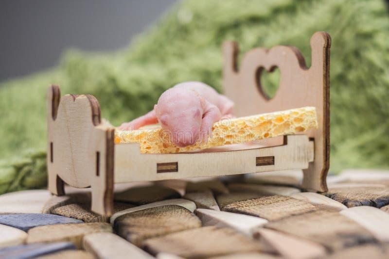 O conceito do sono saudável Rato do bebê que encontra-se no berço imagem de stock