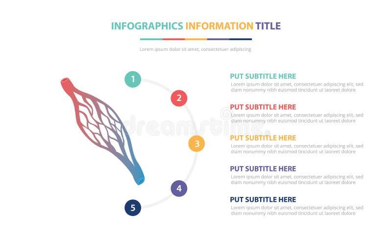 O conceito infographic capilar humano do molde com cinco pontos alista e v?ria cor com fundo branco moderno limpo - ilustração stock