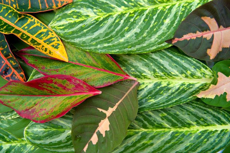 O conceito natural abstrato da textura das folhas fotos de stock royalty free