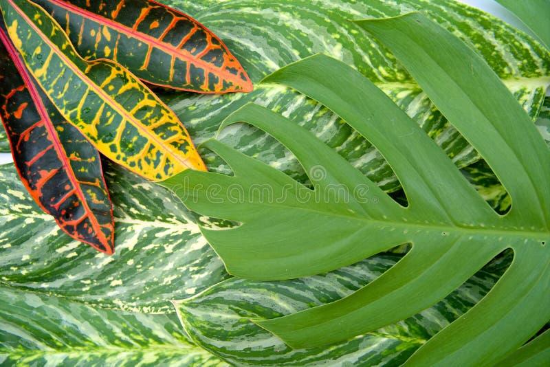 O conceito natural abstrato da textura das folhas imagens de stock