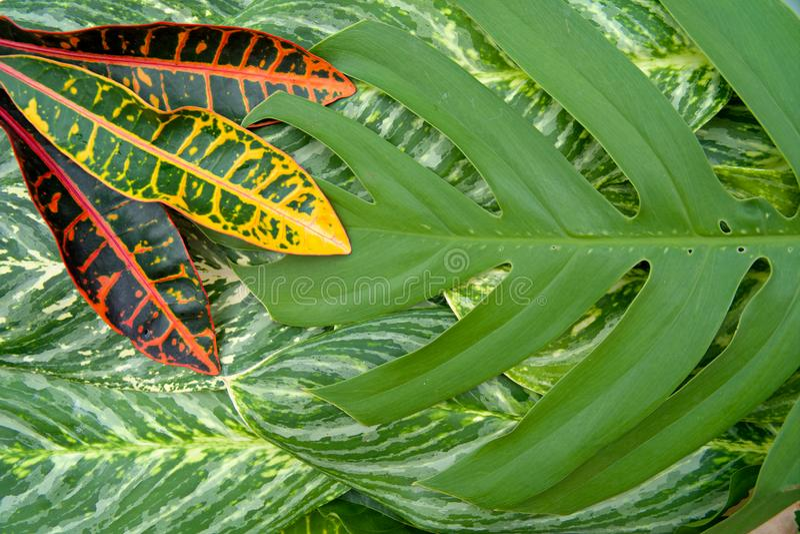 O conceito natural abstrato da textura das folhas imagem de stock