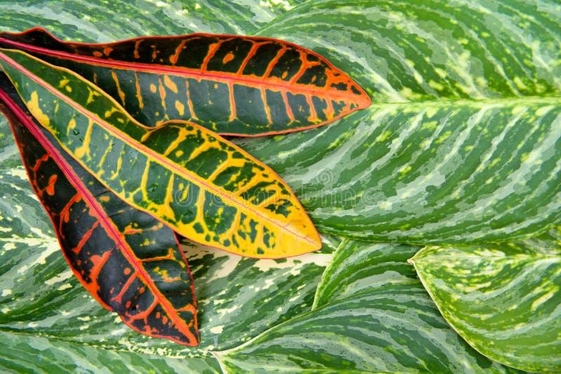 O conceito natural abstrato da textura das folhas fotografia de stock