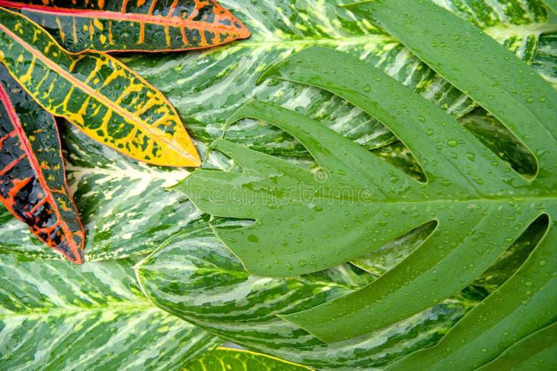 O conceito natural abstrato da textura das folhas foto de stock