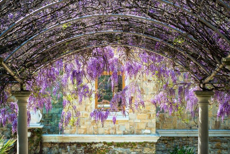 O constructionr arqueado cobriu com as flores de inclinação roxas lilás coloridas da glicínia sobre um caminho das escadas que co fotografia de stock royalty free