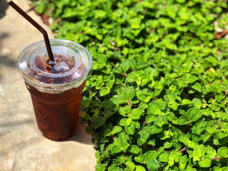 O copo de café frio da fermentação no assoalho do cimento perto do verde da pastilha de hortelã sae foto de stock royalty free