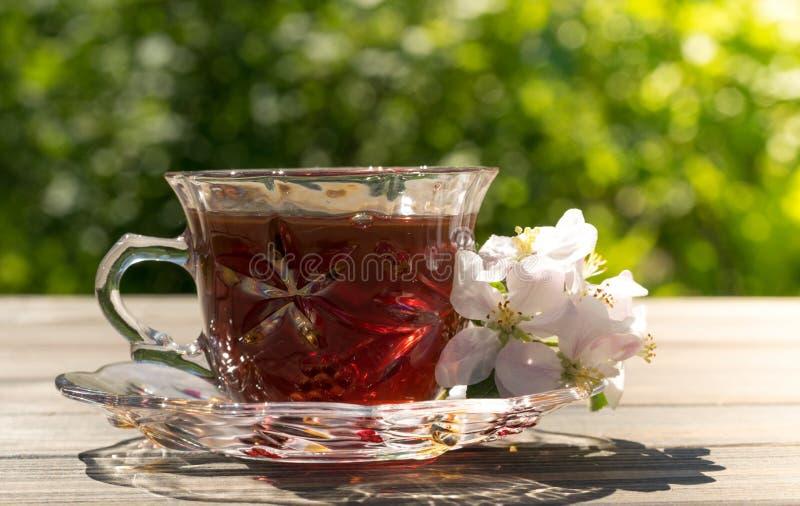 O copo de vidro da tisana e a mola do verde jardinam imagens de stock royalty free