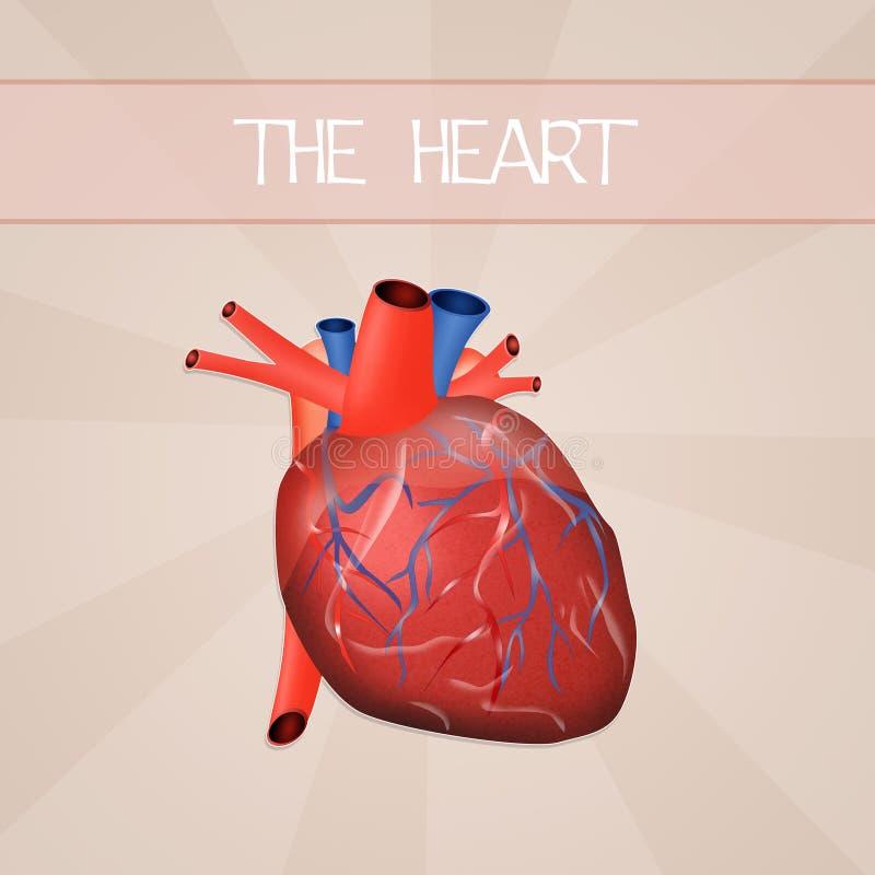 O coração ilustração do vetor