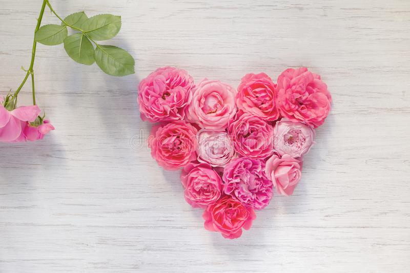 O coração do rosa do vintage aumentou flores no fundo e no ramo de madeira brancos com folha verde, vista superior fotos de stock royalty free
