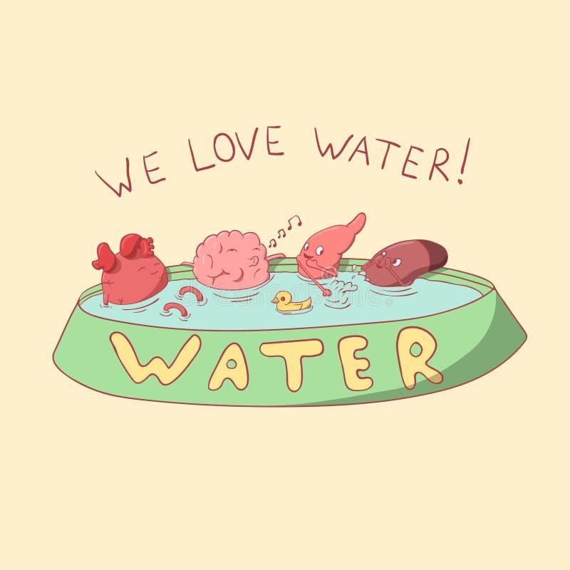 O coração, o cérebro, o fígado e o estômago gostam de beber a água foto de stock