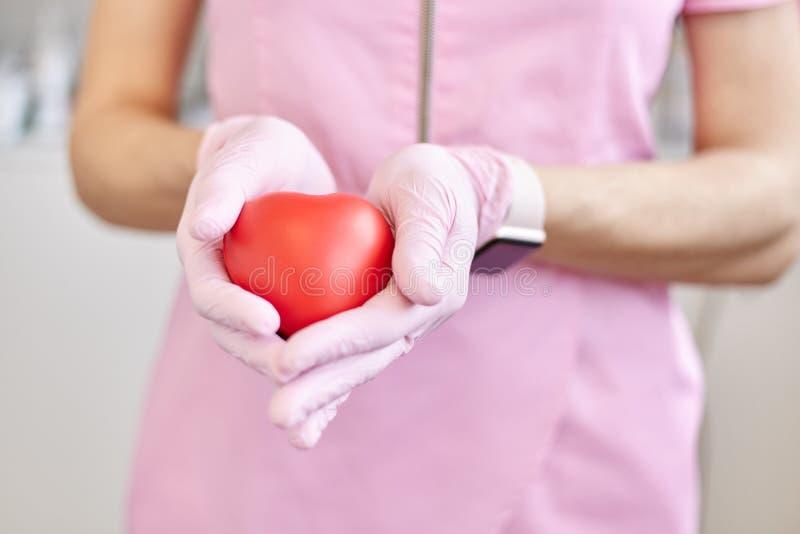 O coração plástico vermelho nas mãos fêmeas, o símbolo do departamento de cardiologia, a imagem sem cara da enfermeira ou o cardi fotos de stock