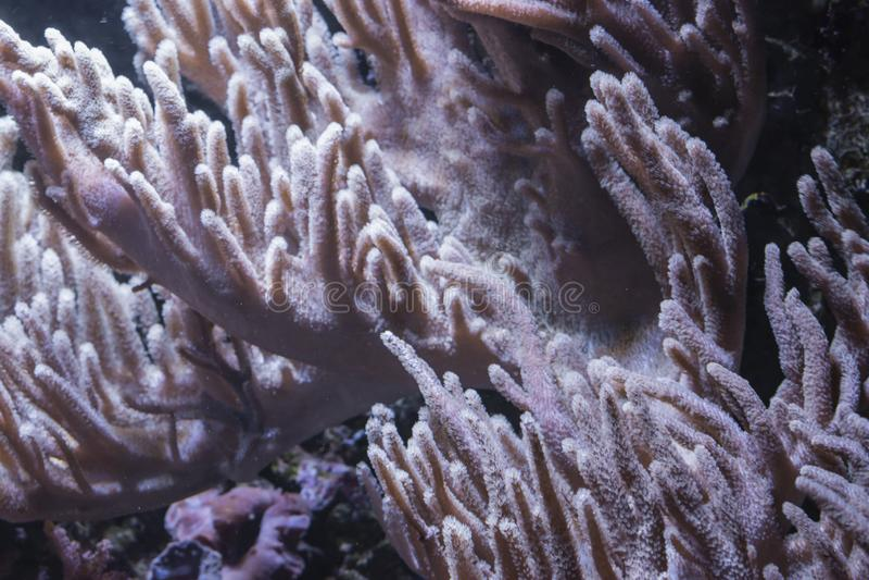 O coral do potro fotos de stock